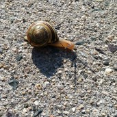 Snail travels