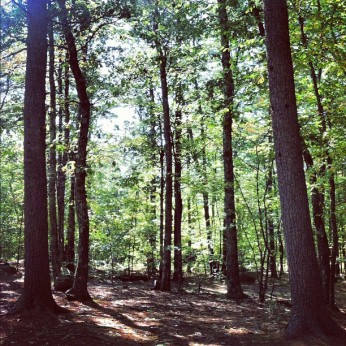Zion's Camp, New Hampshire